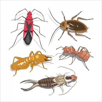 Muitos insetos diferentes