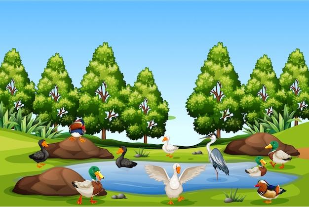 Muitos pássaros na natureza