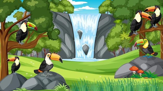 Muitos pássaros tucanos na floresta ou cenário de floresta tropical com muitas árvores