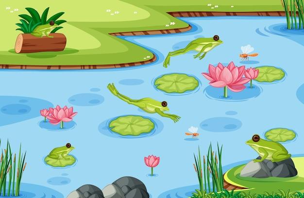 Muitos sapos verdes na cena do lago