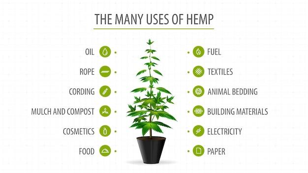 Muitos usos de cânhamo, banner branco com infográfico de usos de cannabis e erva-de-cheiro de planta de cannabis