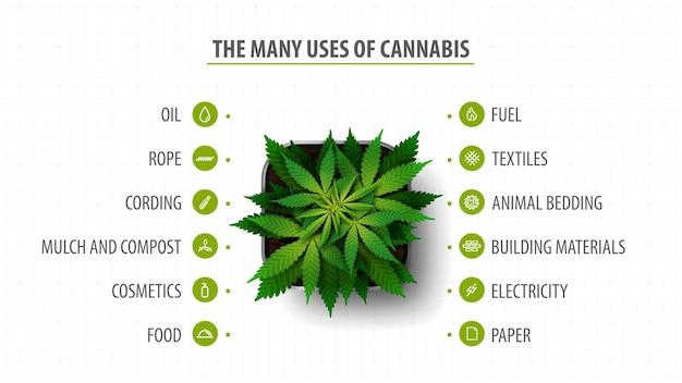 Muitos usos de cannabis