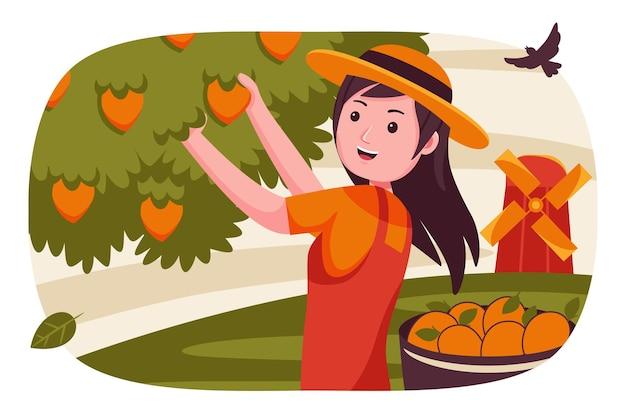 Mulher agricultora colhe frutas da árvore de manga.