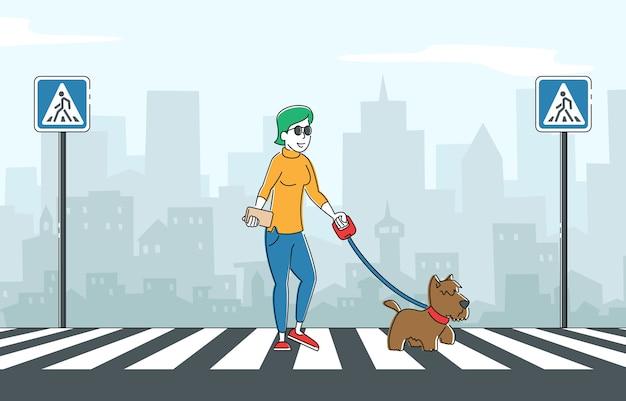 Mulher cega caminhando com cão-guia atravessando a rua ao longo da zebra