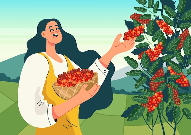 Mulher trabalhador personagem colher grãos de café