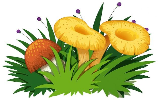 Mushroms e grama isolado