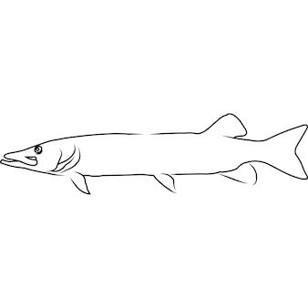 Muskellunge mão esboçada ilustração vetorial desenhada à mão