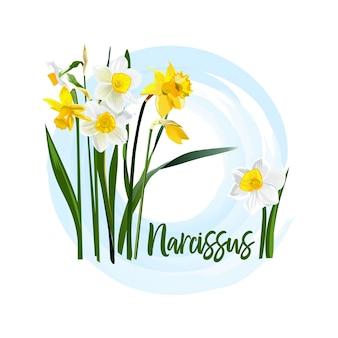 Narciso de flores decorativas