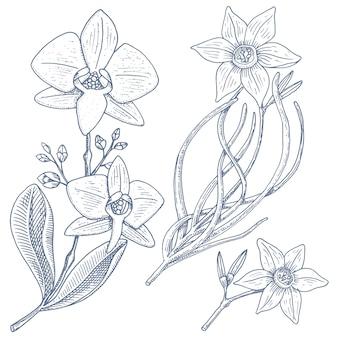 Narciso e orquídea com folhas e brotos. flores do casamento na planta jardim ou primavera.