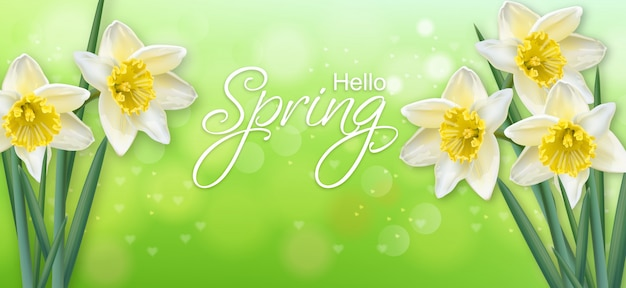 Narciso primavera flores