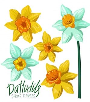 Narcisos. flores da primavera