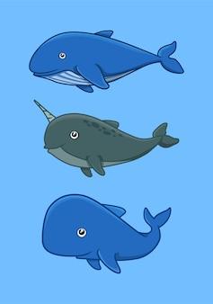 Narval de baleia azul e pacote de cachalote
