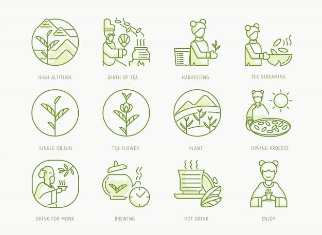 Nascimento do jogo de chá chinês com imperador, fabricação de chá, folha, monge budista, menina, fermentação, processo de secagem ao sol e fluxo de folhas de chá,