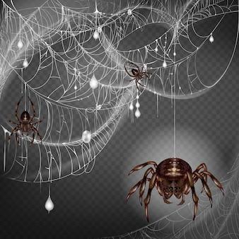 Ninho de aranhas perigosas e escarificantes