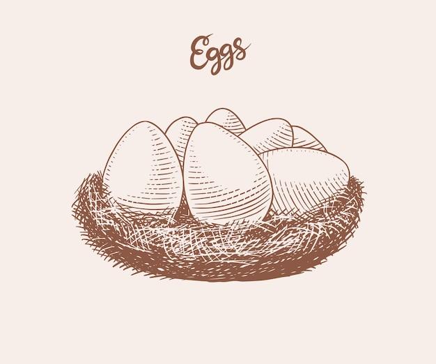 Ninho de ovos. produto agrícola. esboço vintage retrô desenhado de mão gravada. estilo xilogravura. ilustração para menu ou cartaz ou páscoa.