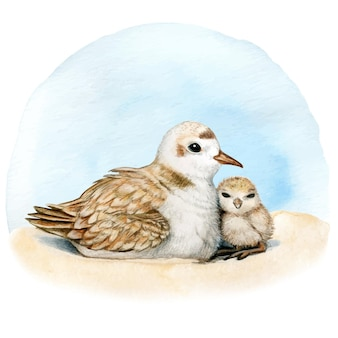 Ninho de tarambola aquarela na areia mãe e filho