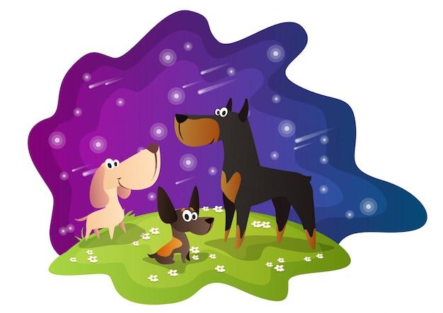 Noite do cão
