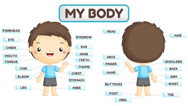 Nome das partes do corpo do menino