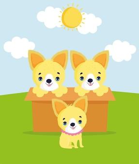 Nos adote cachorros fofos