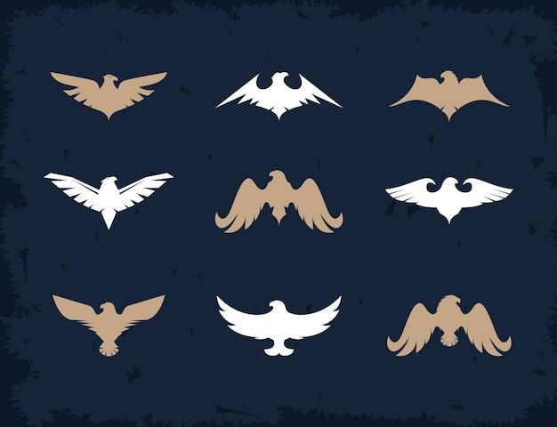 Nove águias e falcões