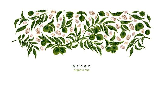 Noz-pecã grão plantação verde variedade de nozes folhagem rústica ilustração gráfica botânica