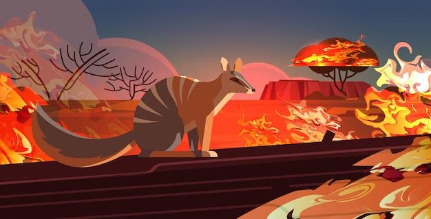 Numbat escapando de incêndios na austrália animais morrendo em incêndios florestais conceito de desastre natural intensas chamas alaranjadas horizontais
