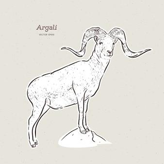 O argali, ou a ovelha da montanha, mão desenhar esboço