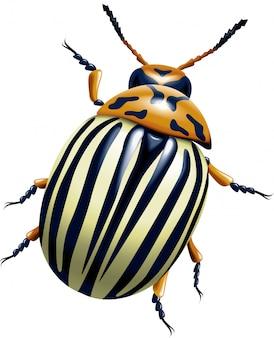 O besouro de batata do colorado