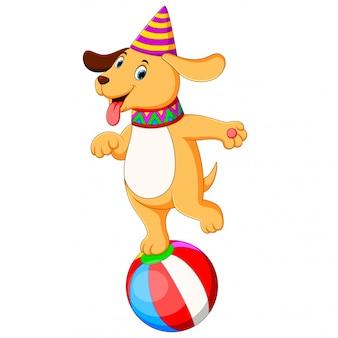 O cão de circo, jogando e em pé na bola