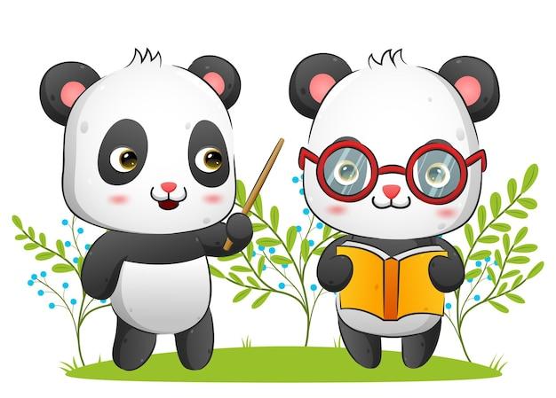 O casal de panda segura um livro enquanto a professora dá a ilustração teórica