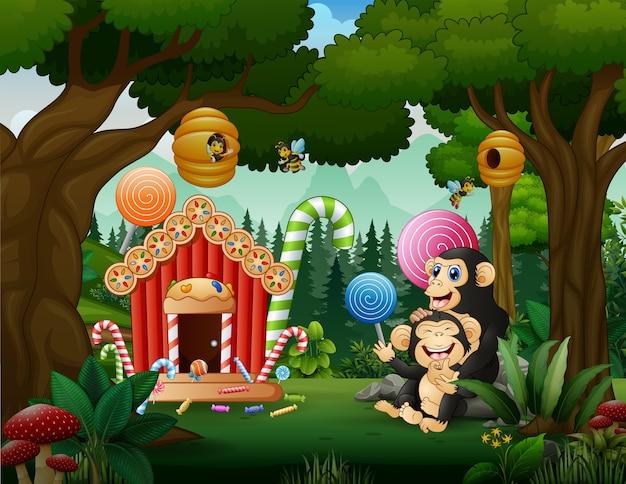O chimpanzé se divertindo na terra dos doces