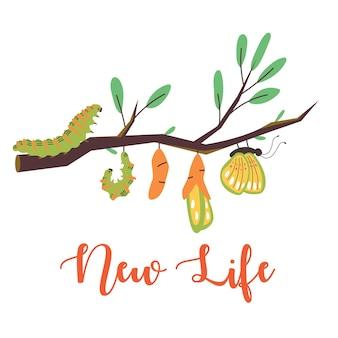 O ciclo de vida de uma lagarta se transformando em uma borboleta e rotulando uma nova vida