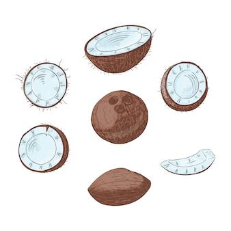 O coco inteiro e cortou no grupo de cor desenhado mão das metades.