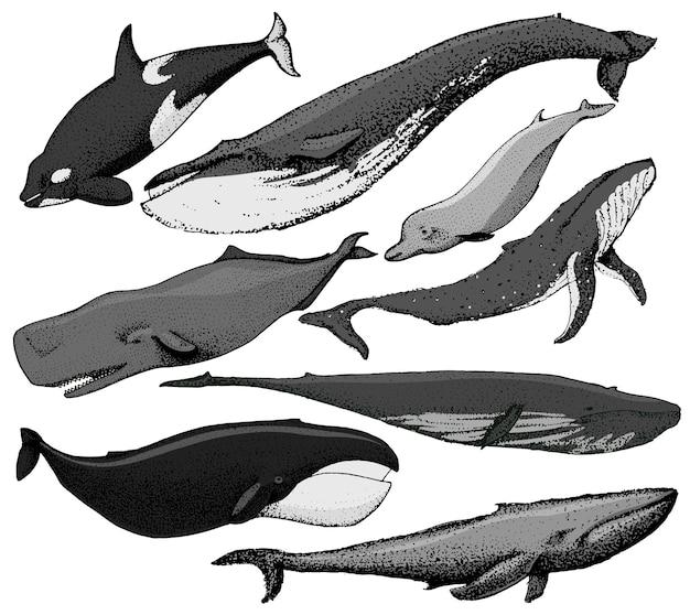 O conjunto de baleias desenhadas à mão inclui vários tipos