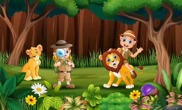 O explorador com leões no parque