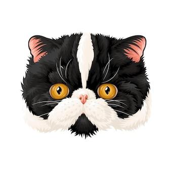 O focinho de um gato preto e branco