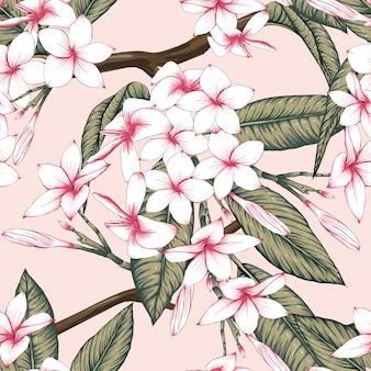 O frangipani floral sem emenda da cor do rosa do teste padrão floresce o fundo.