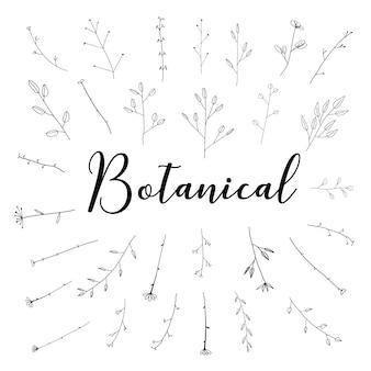 O grupo botânico tirado mão, rabisca o elemento floral, ilustração do vetor.