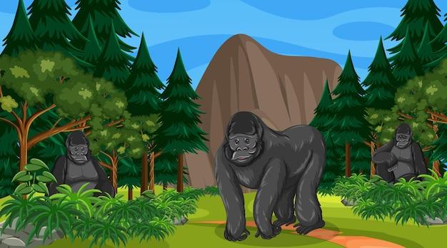 O grupo de gorilas vive em uma floresta ou cenário de floresta tropical com muitas árvores