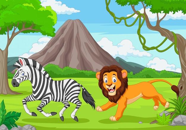 O leão está perseguindo uma zebra em uma savana africana