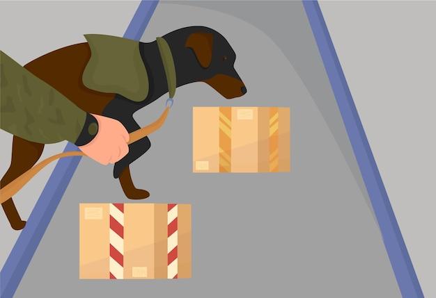 O pacote passa pelo controle aduaneiro, o cão verifica o perigo. plano