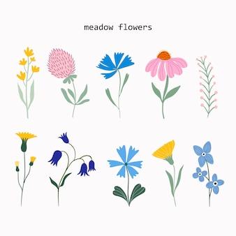 O projeto do vetor da coleção de verão das flores e plantas do prado isolado no fundo branco
