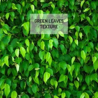 O verde deixa a textura