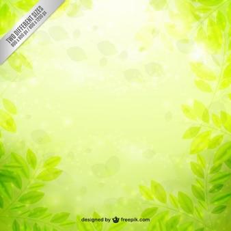 O verde deixa o fundo