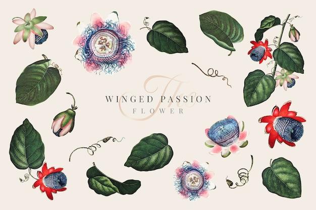 O vetor de coleção de flores da paixão alada