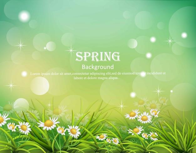 Olá fundo de primavera com flores de camomila