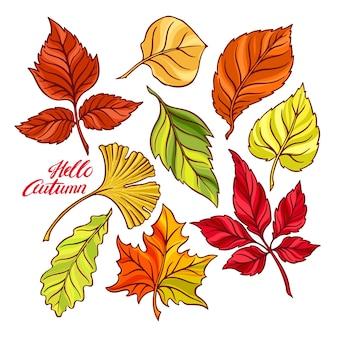 Olá outono. lindo conjunto de folhas de outono. ilustração desenhada à mão