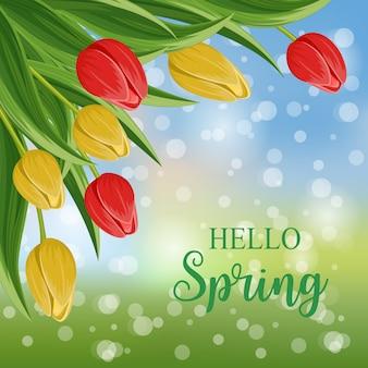 Olá primavera com tulipa florescendo