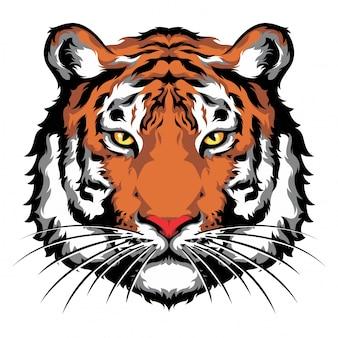 Olhar dianteiro da cabeça do tigre