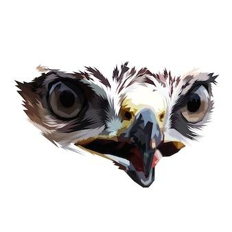Olho de águia no fundo branco isolado